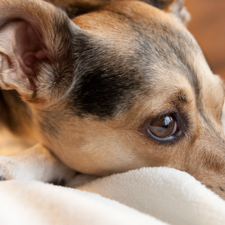 Canine Stress and Stereotypic Behaviours
